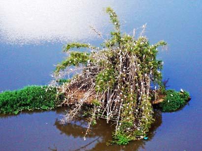 Famosa Ilha do Jegue - habitada pelas garças.